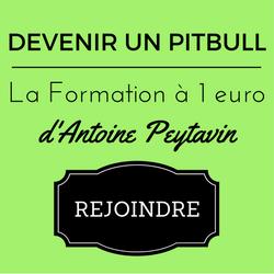 pack-pitbull